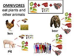 Omnivore Signwiki